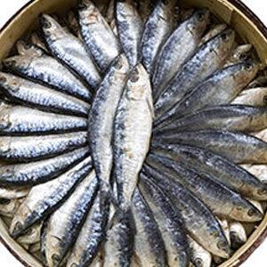 sardina arengada